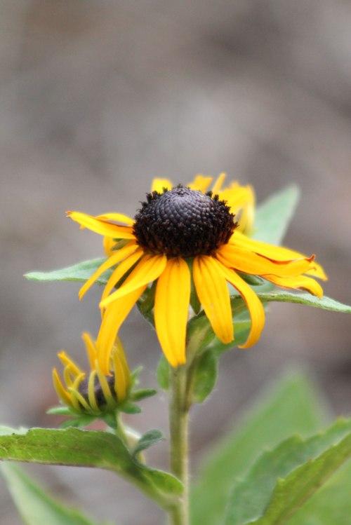 The Yellow Garden Flower