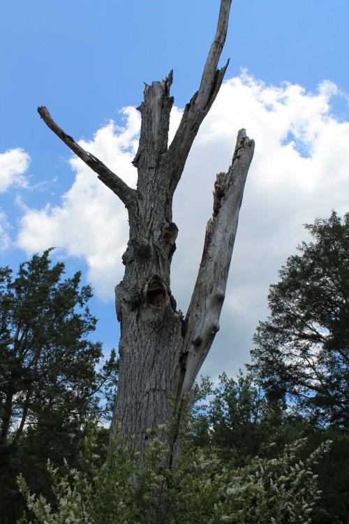The Woodpecker Tree