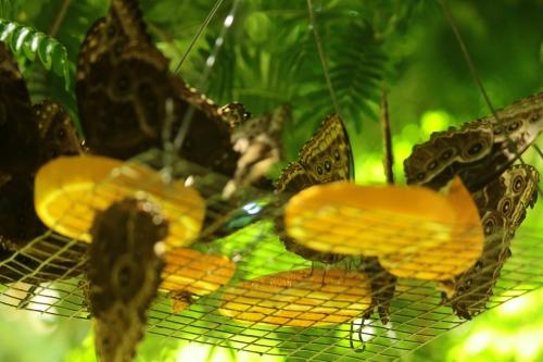 Hungary Butterflies
