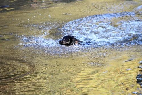 Dog Paddeling